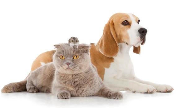 Pets-desktop