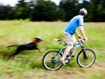 8 Ways to Outsmart a Chasing Dog on Your Bike