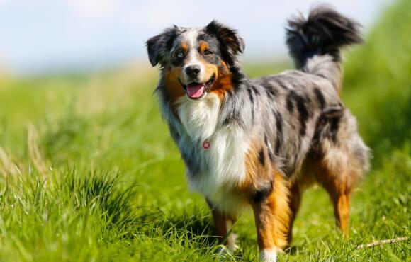 Best Dog Breeds For Outdoor Junkies