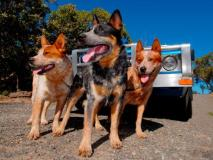 10 Best Dog Breeds for Outdoor Junkies