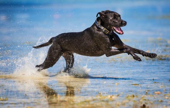 10 Best Dog Breeds For Outdoor Junkies Active