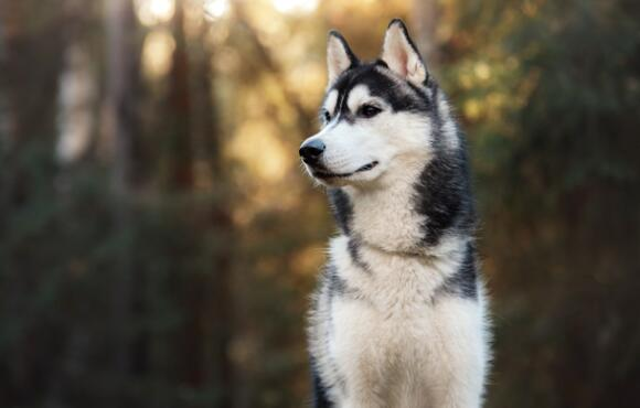 Best Dog Breeds For Active Guys