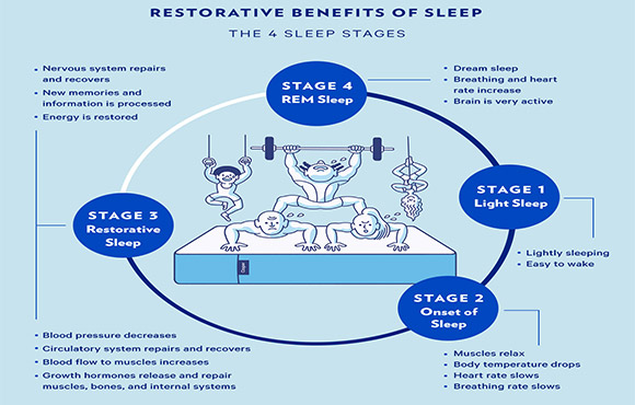 what is the importance of sleep