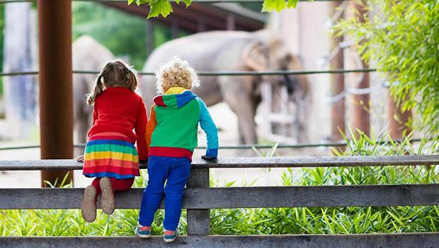 kids looking at elephants
