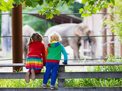 Kids+looking+at+elephants front