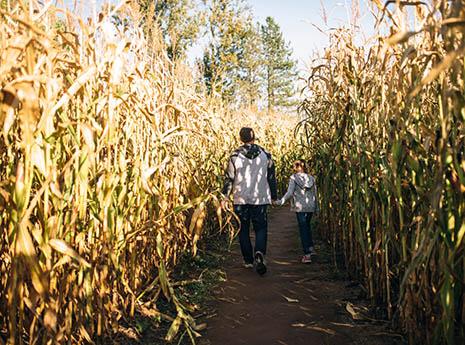 Corn+maze front