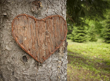 9 Nature-Themed Valentine's Day Ideas