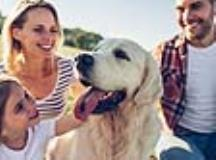 Top Dog Breeds for Active Families