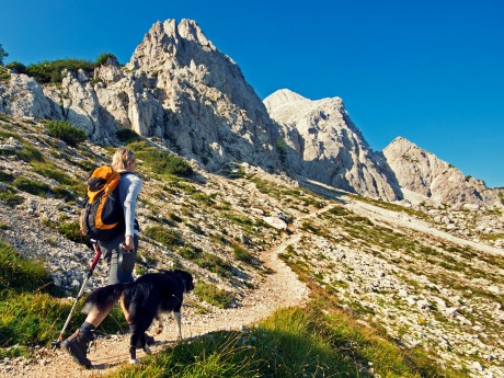 9 Tips For Hiking With Your Dog
