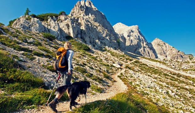 9 Tips For Hiking With Your Dog | ACTIVE