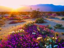 8 Campgrounds for Spring Wildflower Viewing