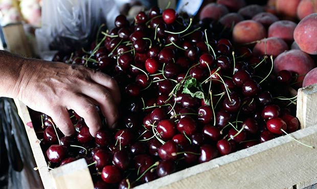 Person grabbing cherries