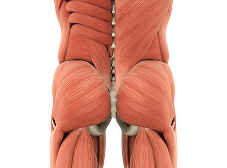 Butt+muscles-front