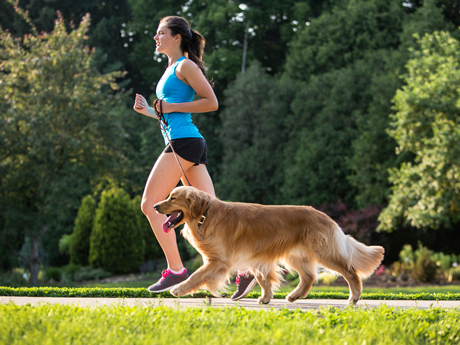 Is It Too Hot to Run with Your Dog?